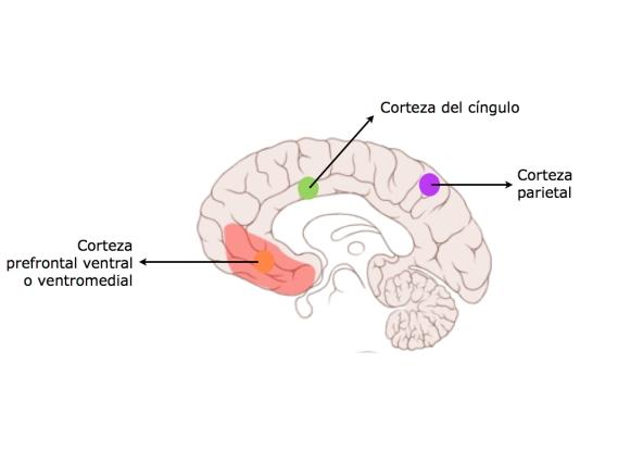 corteza prefrontal ventrolateral derecha