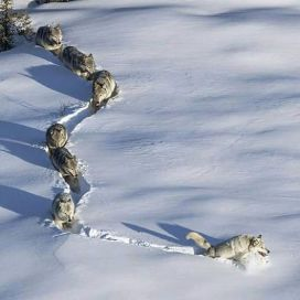 sendero lobos